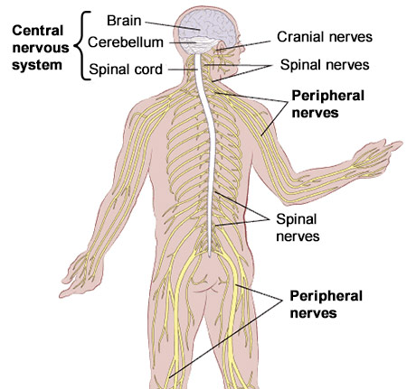 Neurological disorders ny 1